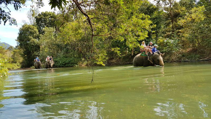Here come the elephants