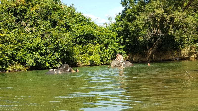 Elephants from Chang Chutiman camp in the river