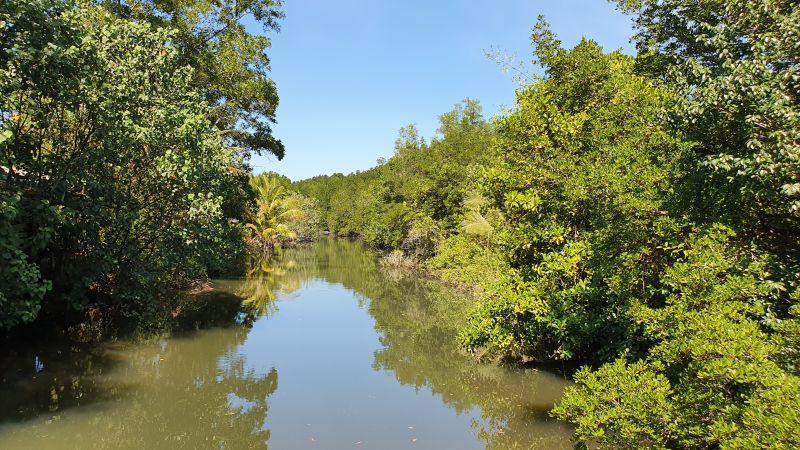 Salakkok Mangrove Walkway views