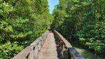Through the mangrives