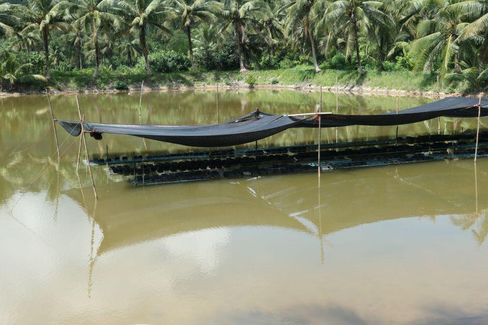Peek Kla Kah Khang Farm