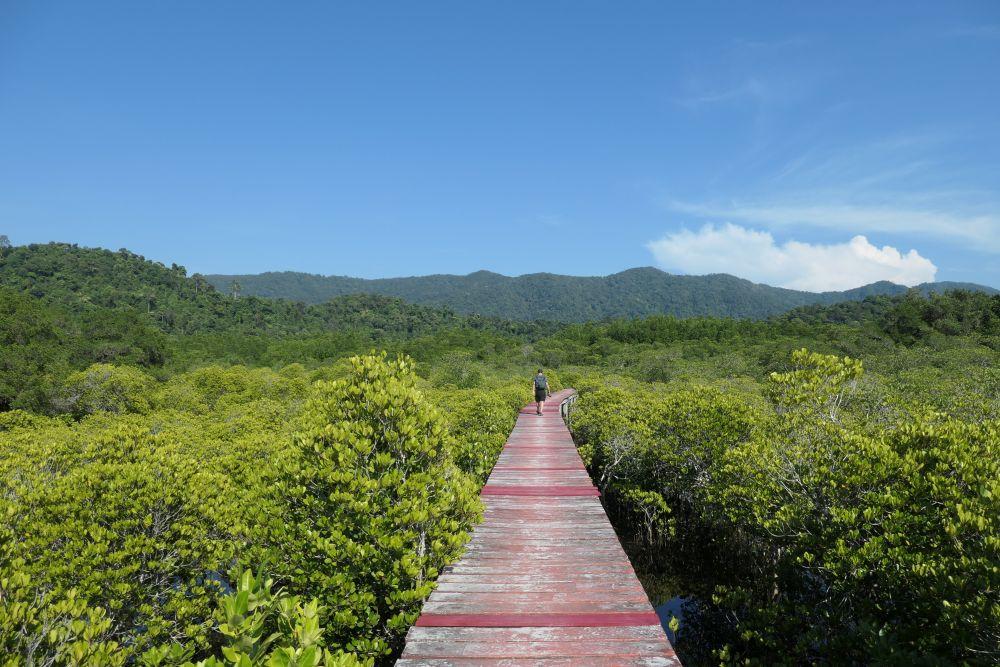 Mangrove walkway in Salakphet