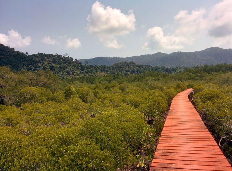 Mangrove walkway - a sea of green