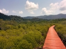 Mangrove walkway - a sea of green