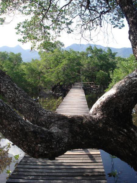 spet-mangroves-13