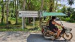 Turning to the Mangrove Walkway