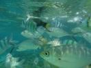 Snorkelling at Koh Yuak