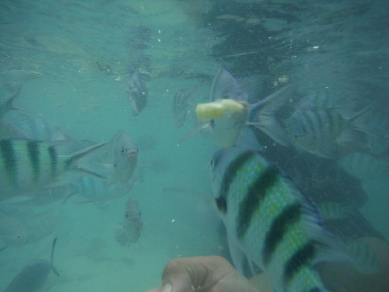 Jong, Pui\'s husband, feeding the fish
