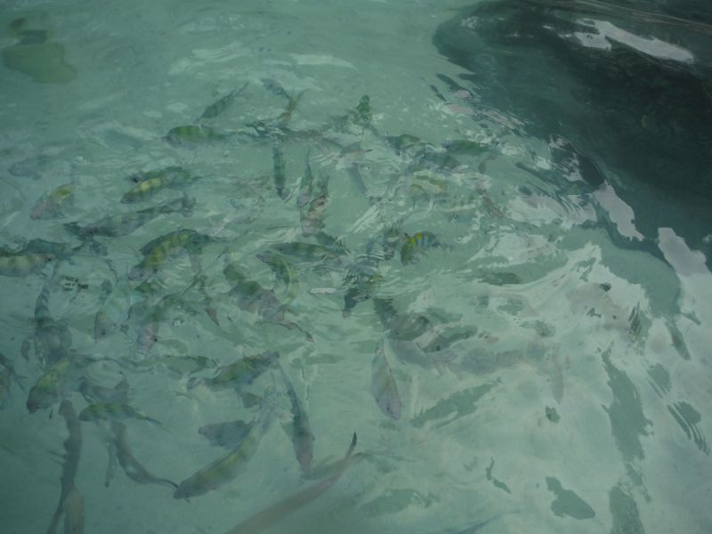 Lots of fish.  No effort needed to see them