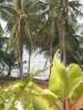 terrace-villa-koh-chang15