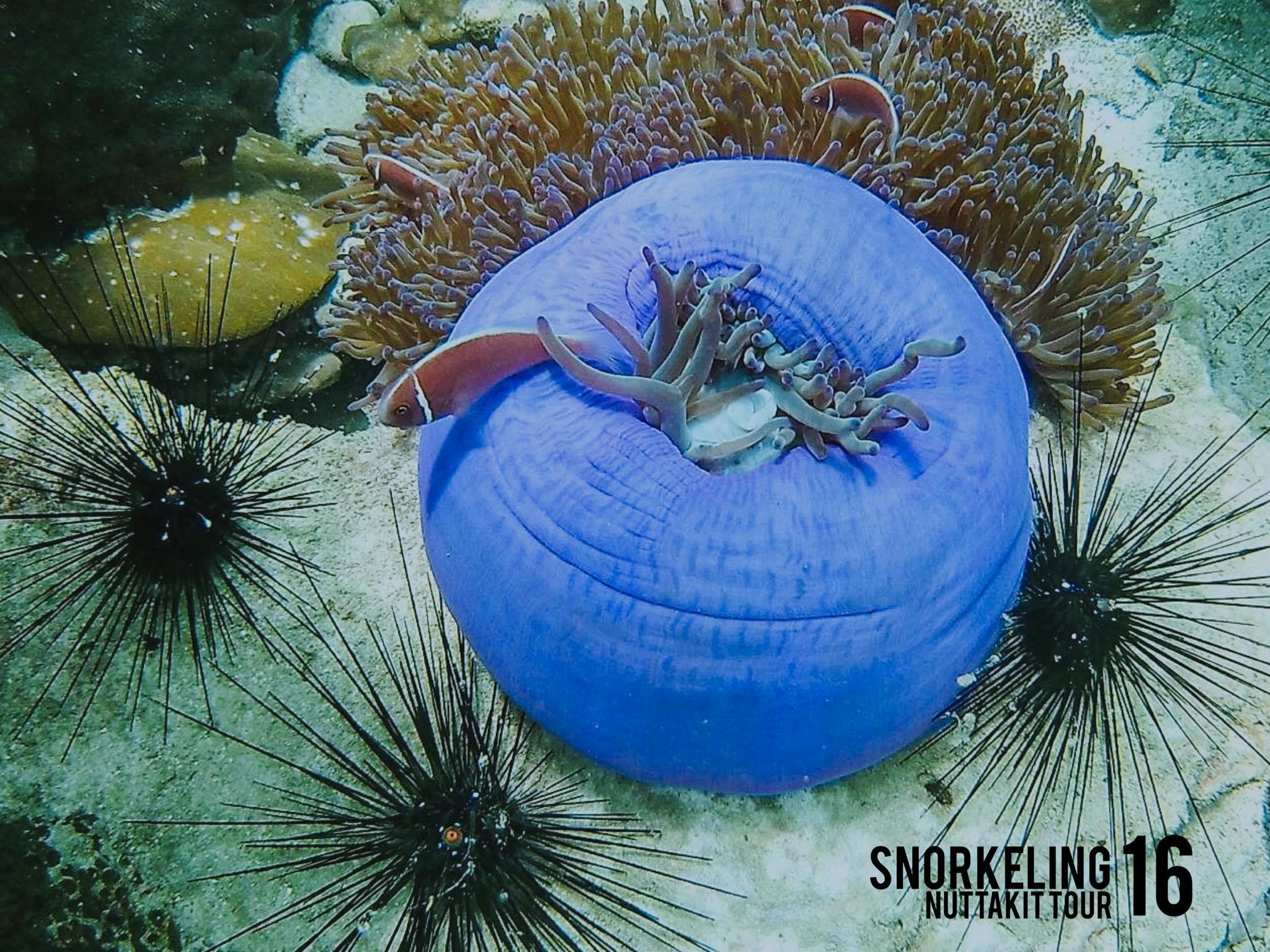 Snorkelling Koh Wai