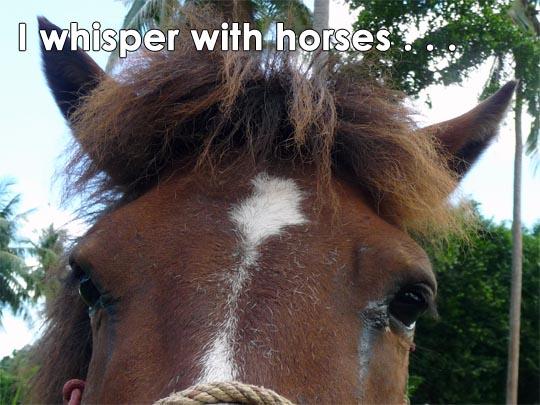 1-horse