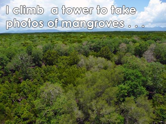 1-mangroves