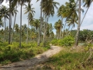 Road to Wai Chaek beach