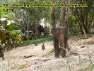klong-prao-walk26c
