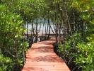 Salakphet Mangrove Walkway