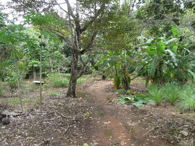 Trail through the durian trees