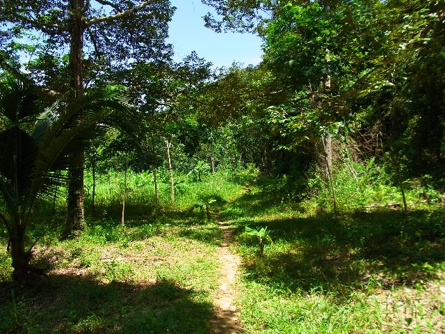 Towards the jungle