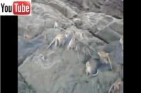 bangbao-monkeys