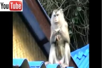 monkey-white-sand-beach