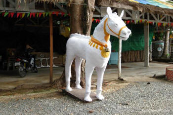 Somchai the Soothsaying Stallion