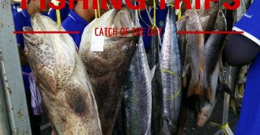Fish caught by anglers on a day fishing trip from koh Chang