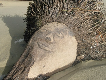 Image of Jesus Appeared on the Coconut Palm