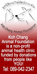 Support Koh Chang Animal Project\