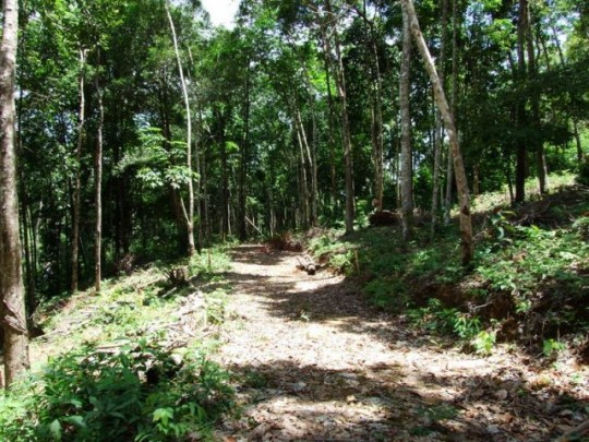 Land for sale on Koh Chang