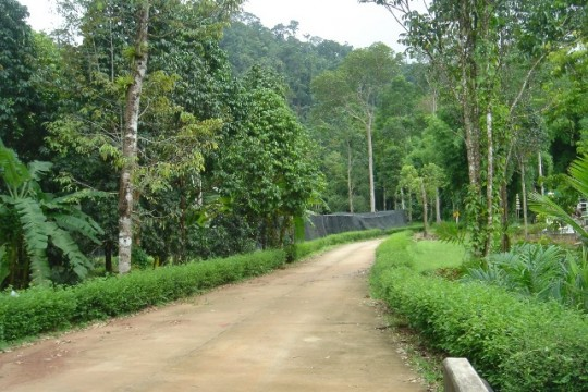 koh chang land for sale