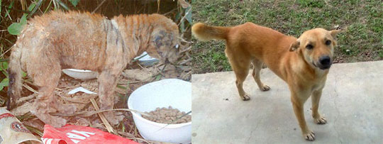 Koh Chang dog rescue