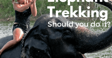 Should you ride an elephant on holiday in Thailand?