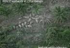 Chantaburi elephants