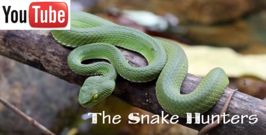 Video ofvenomous snakes on Koh Chang and Koh Kood