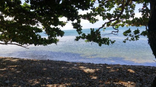 Pearl beach snorkelling