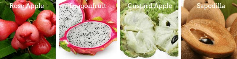Custard Apple, Sapodilla, Rose apple, Dragonfruit