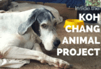 Help Lisa at Koh Chang animal project