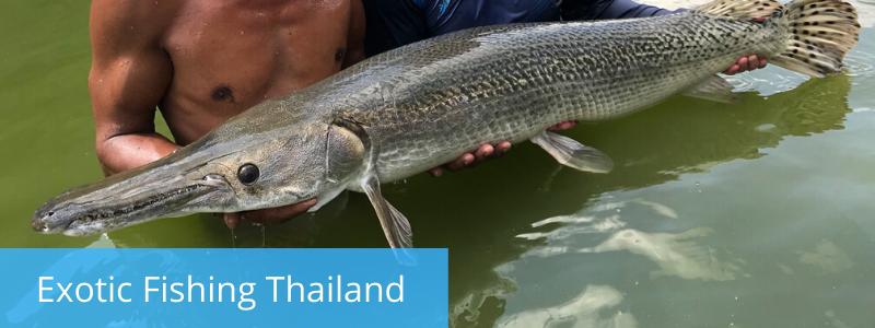 Aligator Gar at Exotic Fishing Thailand