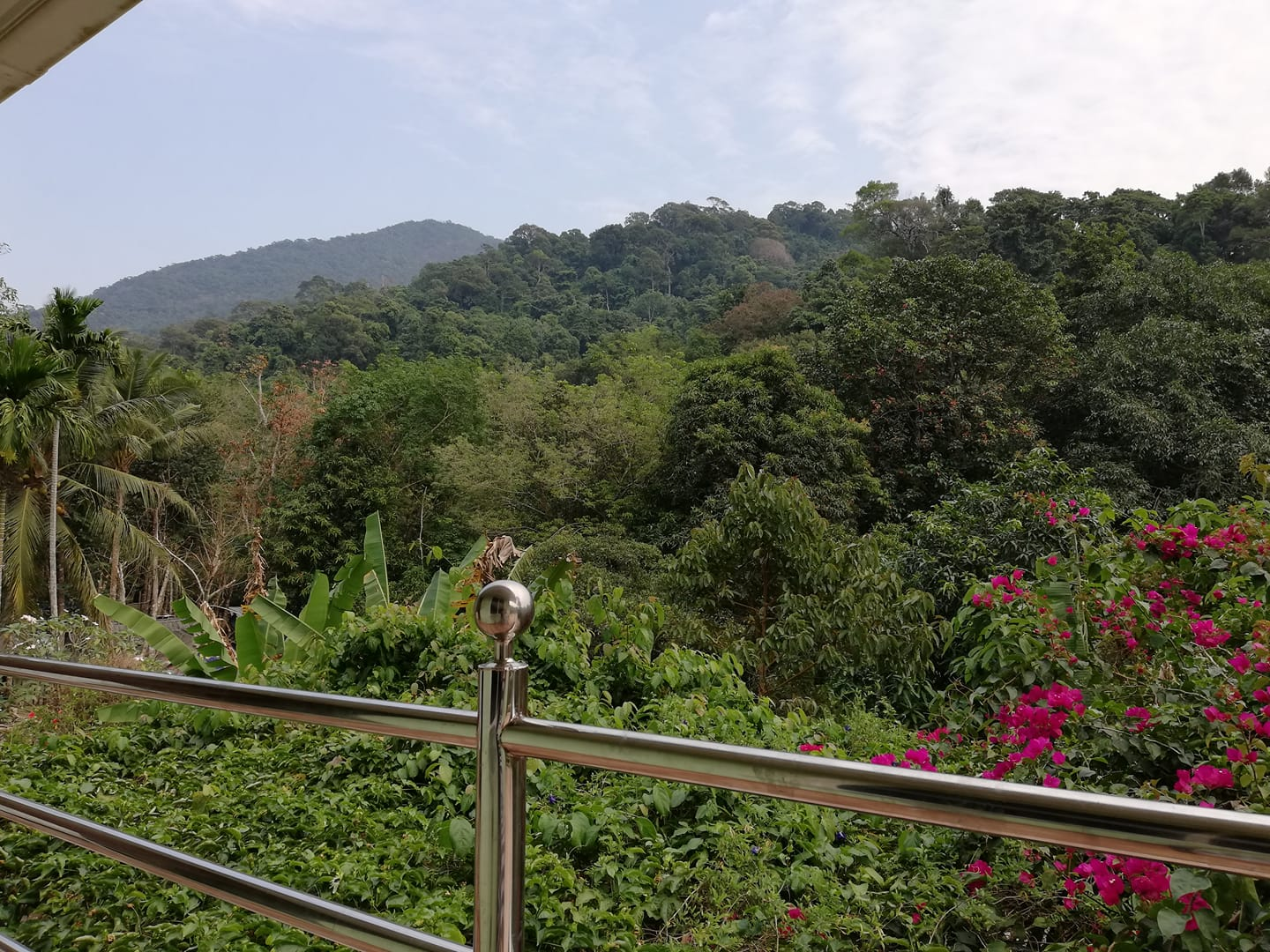 Jungle view from Pingpong's House guesthouse , White Sand beach