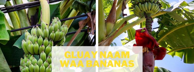 Gluay Naam Waa Thai bananas