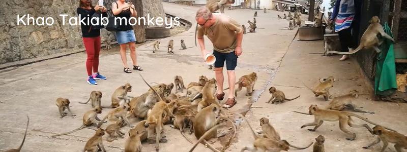 Monkeys at Khao Takiab