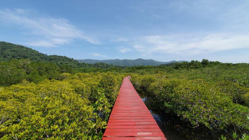 Koh Chang mangrove walkway
