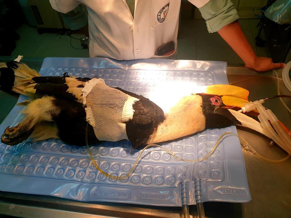 Hornbill shot on Koh Chang